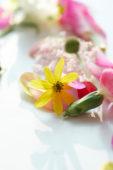 Stilleven van bloem