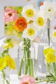 Narcissus op vazen