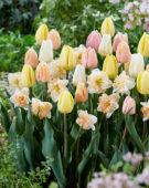 Tulipa en Narcissus mix