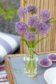 Allium Sweet Discovery
