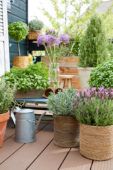 Herbs on pot on rooftop garden
