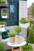 Herb collection on roof terrace