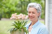 Lady planting Lewisia