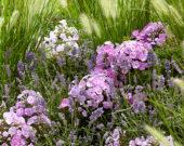 Gemengde vaste planten