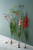 Contemporary summer flower series