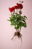 Eigentijdse zomerbloemen serie