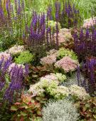 Gemengde vaste planten, Sedum Brilliant