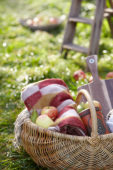 Picnic basket in orchard