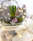 Decorated Hyacinthus bulb