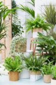 Indoor plants collection