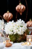 Christmas daffodils