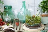 Terrarium indoor plants