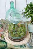 Terrarium indoor plants
