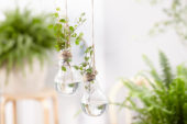 House plants in light bulbs