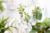 House plants in light bulbs