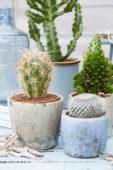 Cactus combinatie