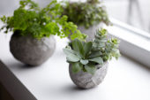 House plants in homemade cement planters