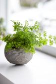 Fern in homemade cement planter