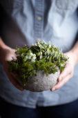 Kamerplant in zelfgemaakte bloempot
