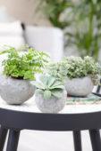 Kamerplanten in zelfgemaakte bloempotten