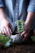 Vetplantjes verpotten