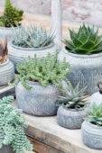 Vetplanten collectie