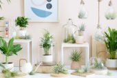 Tillandsia collectie