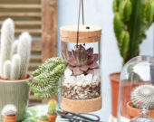 Succulents in glass