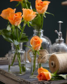 Rosa oranje
