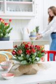 Bulb bouquet Tulipa