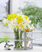 Narcissus combinatie