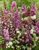 Vaste planten combinatie
