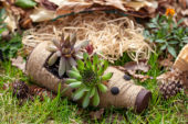 Succulents in bottle