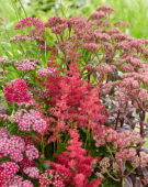 Vaste planten mix rood