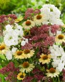 Vaste planten mix