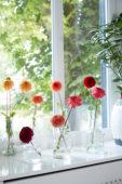 Dahlias in vases