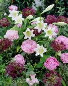 Summer, Lilium Gelria, Paeonia, Allium