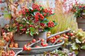 Autumn ambiance