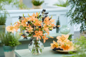 Lilium Orange Cocotte