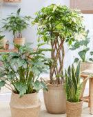 Kamerplanten collectie