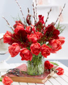 Hippeastrum spring combination
