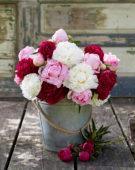 Paeonia sorbet bouquet
