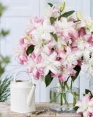 Dubbelbloemige oriëntaalse lelies op vaas