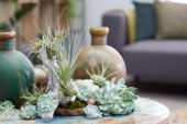 Air plant collection