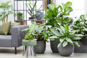 Indoor plant collection