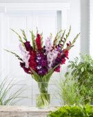 Gladiolus Blue & Purple mix
