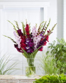 Gladiolus Blue & Purple mix