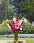 Gladiolus Romantic Mix