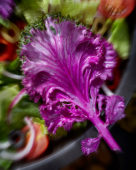 Brassica Rainbow Candy Crush, edible ornamental cabbage