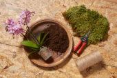 Creating Phalaenopsis kokedama